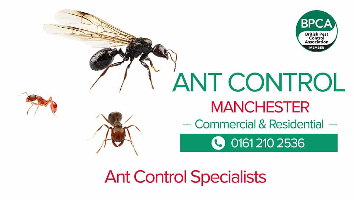 Ant pest control Manchester