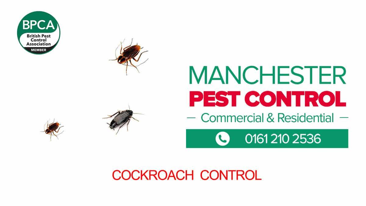Cockroach Pest Control Manchester