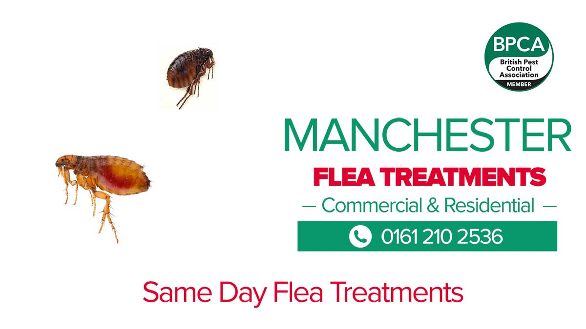 Flea Control Manchester