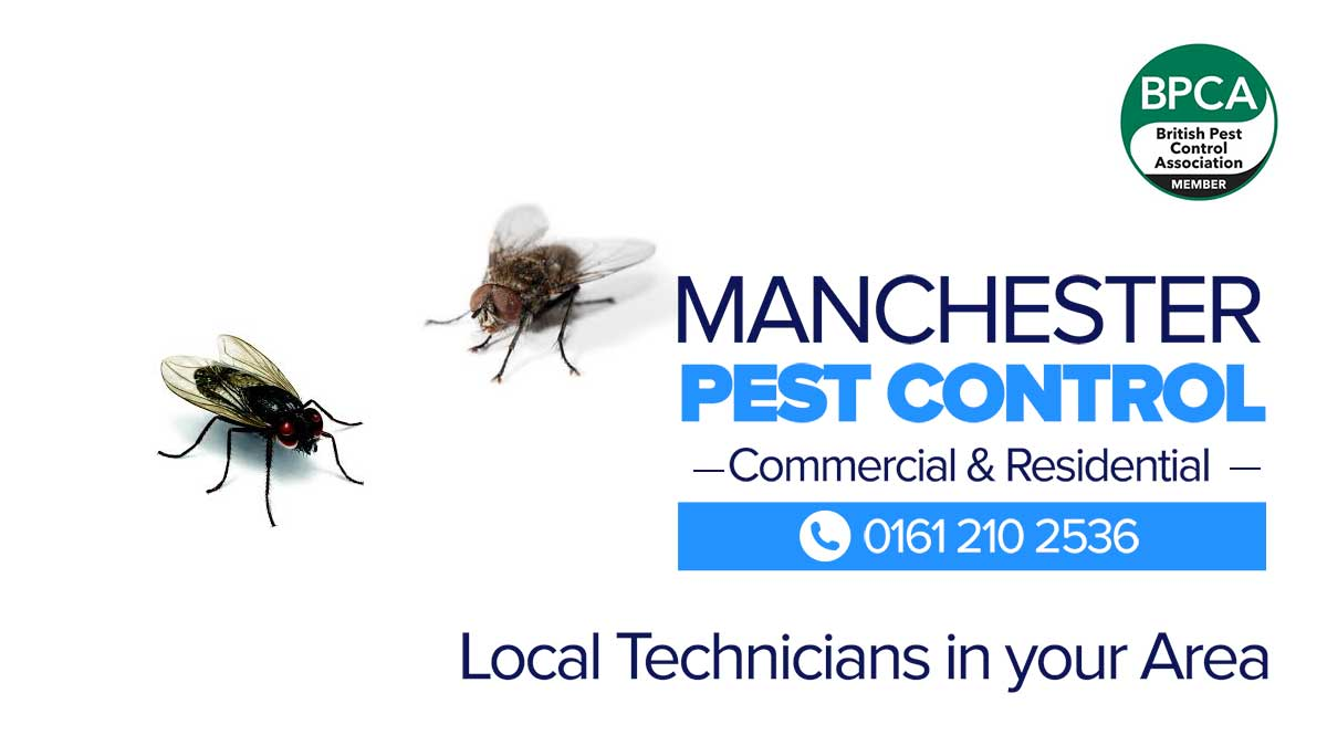 fly pest control Manchester