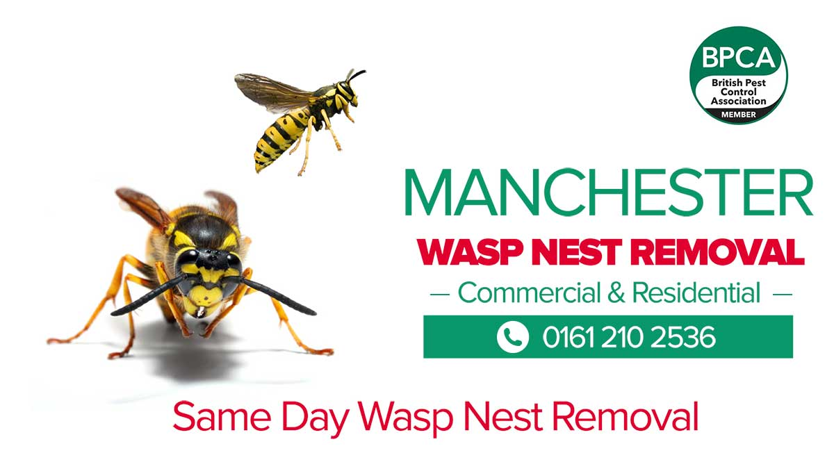 Wasp Nest Removal Manchester