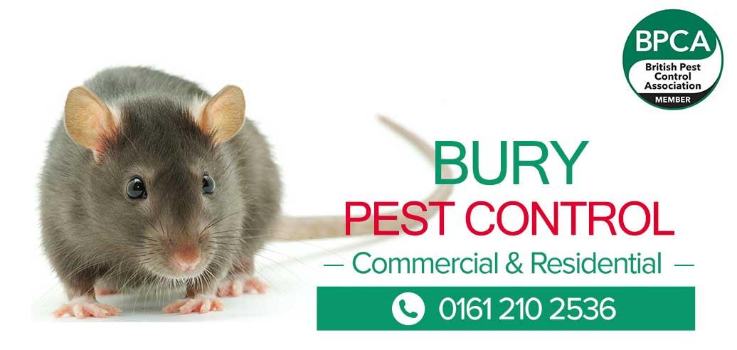 Pest-Control-Bury